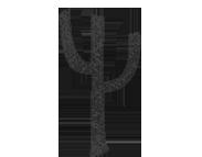 cabo-cactus